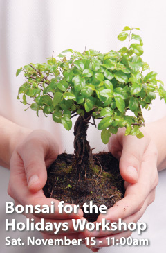 Bonsai for the Holidays Workshop