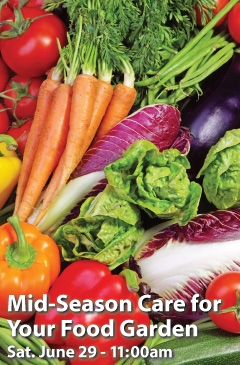 Mid-Season Care for Your Food Garden