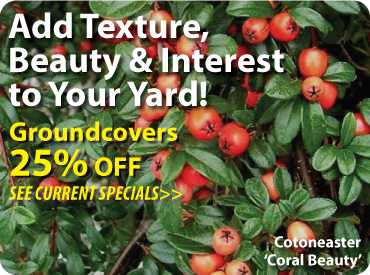Groundcovers 25$ Off