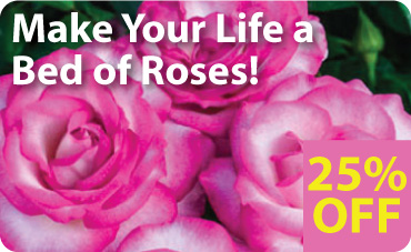 Roses on Sale - 25% Off!