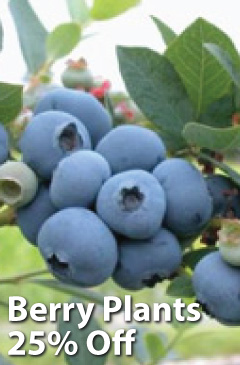 Berry Plants 25% Off