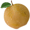 Shinko Asiani Pear